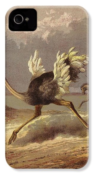 Chasing The Ostrich IPhone 4s Case by English School