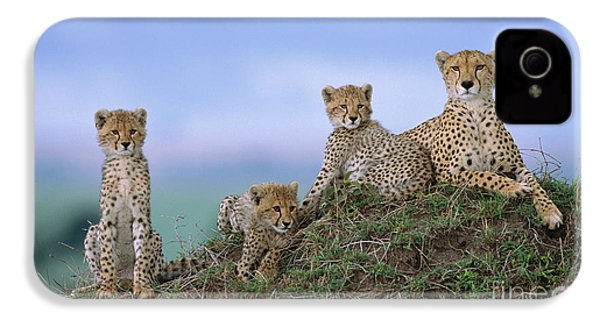 Cheetah Mother And Cubs Masai Mara IPhone 4s Case by Yva Momatiuk John Eastcott