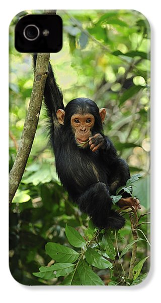 Chimpanzee Baby On Liana Gombe Stream IPhone 4s Case by Thomas Marent