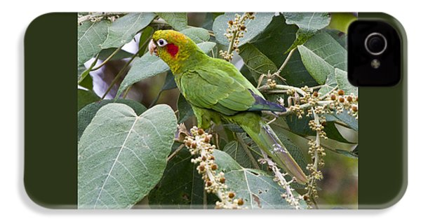 Chiriqui Conure 2 IPhone 4s Case by Heiko Koehrer-Wagner