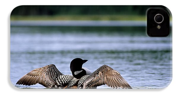Common Loon IPhone 4s Case by Mark Newman