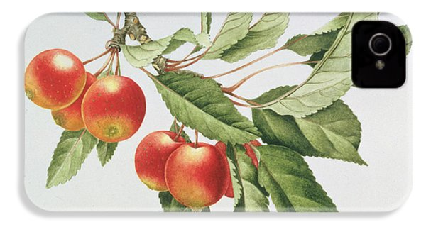 Crab Apples IPhone 4s Case by Sally Crosthwaite