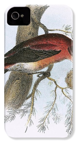 Crossbill IPhone 4s Case by English School