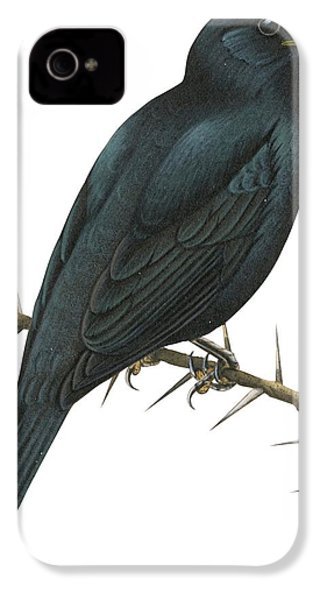 Cuckoo Shrike IPhone 4s Case by Anonymous