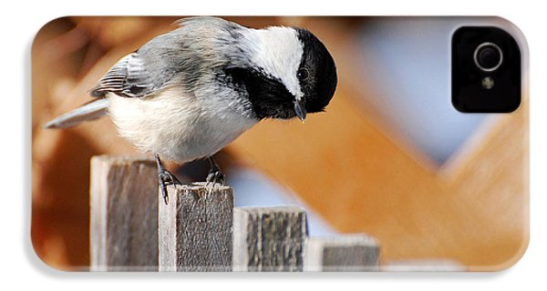 Curious Chickadee IPhone 4s Case by Christina Rollo