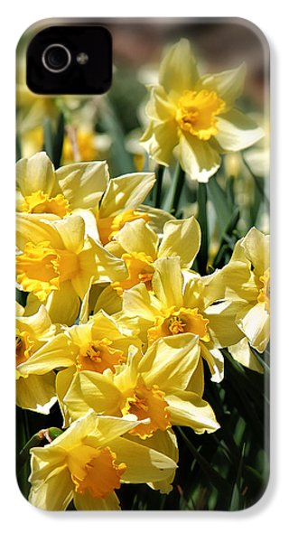 Daffodil IPhone 4s Case by Bill Wakeley