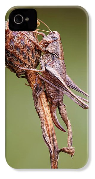 Dark Bush Cricket IPhone 4s Case