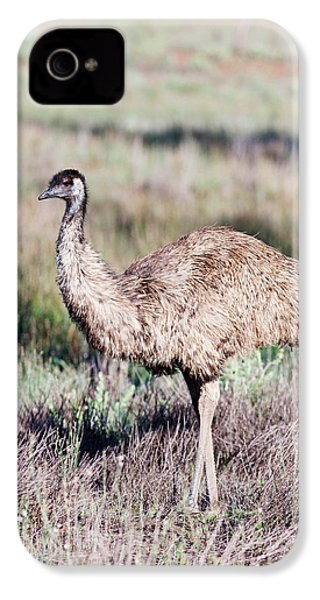 Emu (dromaius Novaehollandiae IPhone 4s Case by Martin Zwick