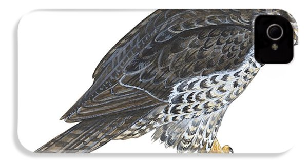 Falcon IPhone 4s Case by Anonymous