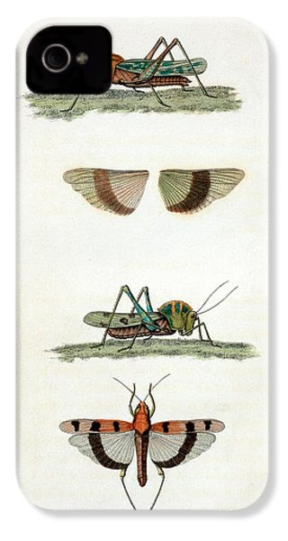 Field Crickets IPhone 4s Case by General Research Division/new York Public Library
