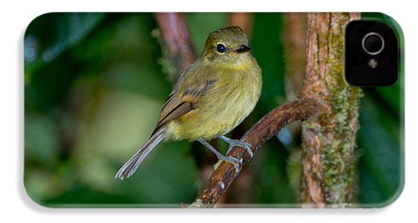 Flavescent Flycatcher IPhone 4s Case by Anthony Mercieca