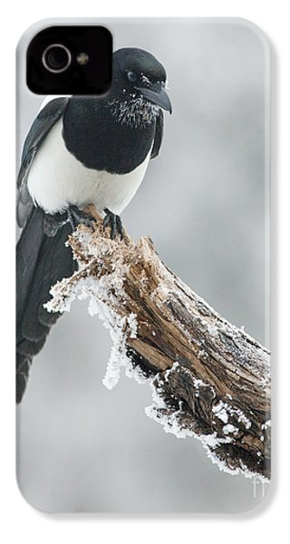 Frosted Magpie IPhone 4s Case by Tim Grams