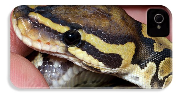 Ghost Royal Python Or Ball Python IPhone 4s Case by Nigel Downer