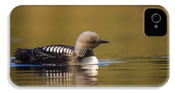 Glassy Waters And A Pacific Loon IPhone 4s Case by Tim Grams