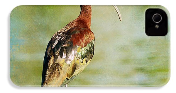 Glossy Ibis IPhone 4s Case by Fraida Gutovich