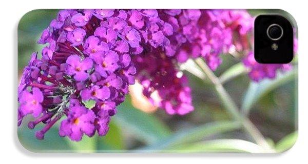 Good Morning Purple Butterfly Bush IPhone 4s Case