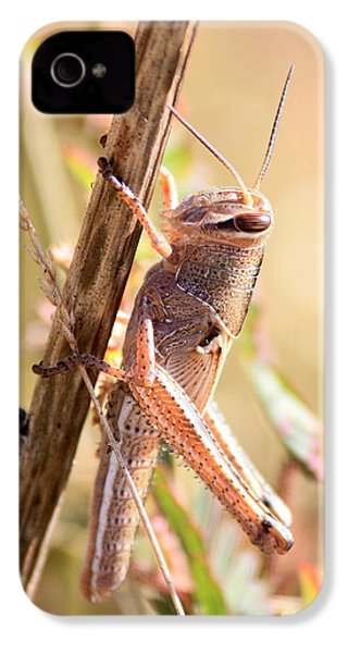 Grasshopper In The Marsh IPhone 4s Case by Carol Groenen
