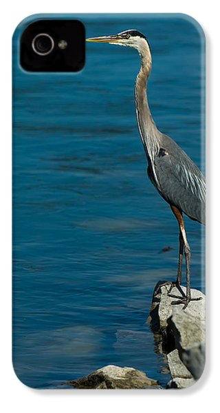Great Blue Heron IPhone 4s Case by Sebastian Musial