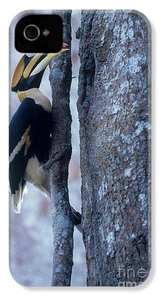 Great Hornbill IPhone 4s Case by Art Wolfe