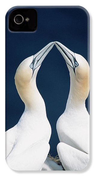 Greeting Gannets Canada IPhone 4s Case by Yva Momatiuk John Eastcott