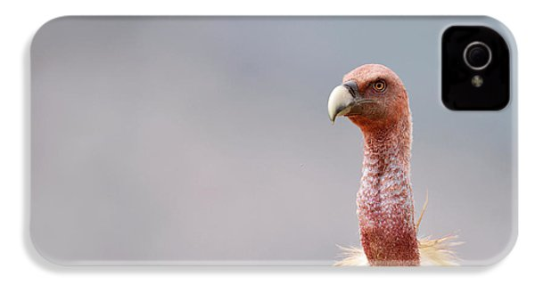 Griffon Vulture IPhone 4s Case by Dr P. Marazzi