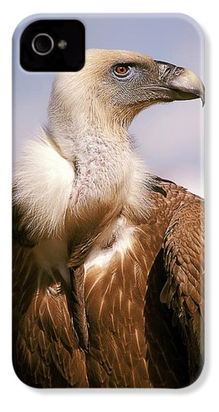 Griffon Vulture (gyps Fulvus) IPhone 4s Case by Photostock-israel