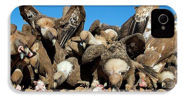 Griffon Vultures Feeding IPhone 4s Case by Nicolas Reusens