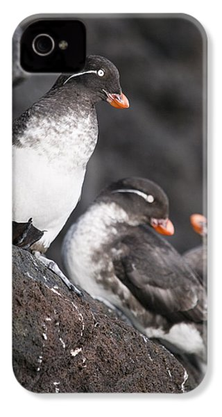 Group Of Parakeet Auklets, St. Paul IPhone 4s Case by John Gibbens