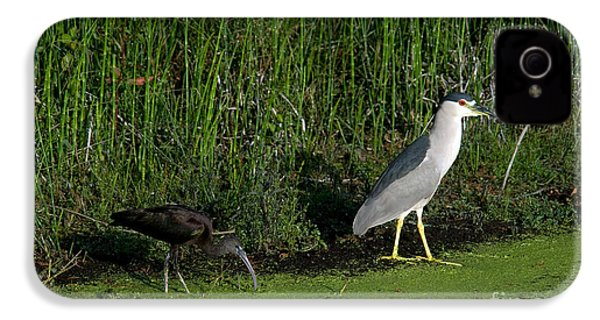 Heron And Ibis IPhone 4s Case by Mark Newman