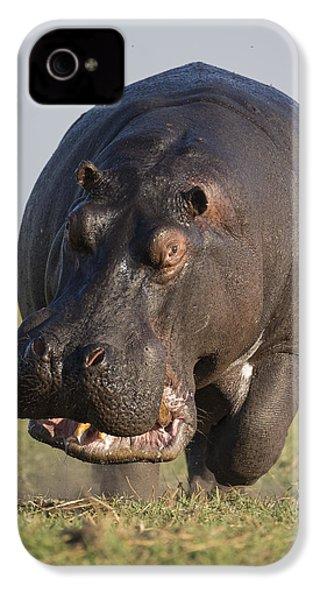 Hippopotamus Bull Charging Botswana IPhone 4s Case by Vincent Grafhorst