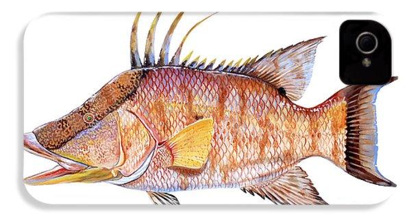 Hog Fish IPhone 4s Case