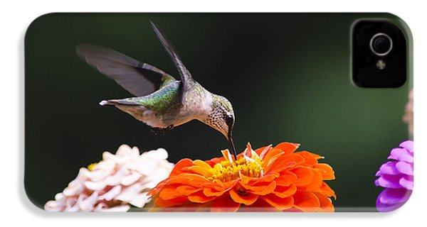 Hummingbird In Flight With Orange Zinnia Flower IPhone 4s Case by Christina Rollo