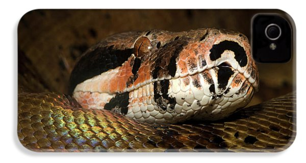 Hypo Colombian Boa IPhone 4s Case by Nigel Downer