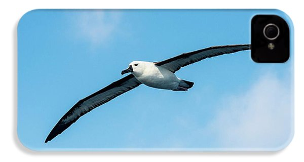 Indian Ocean Yellow-nosed Albatross IPhone 4s Case by Peter Chadwick
