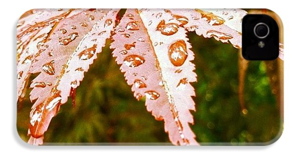 Japanese Maple Leaves IPhone 4s Case
