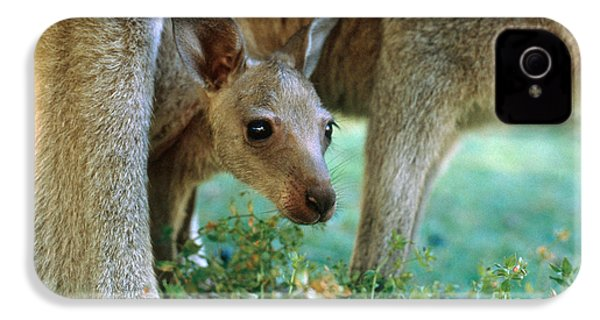 Kangaroo Joey IPhone 4s Case by Mark Newman
