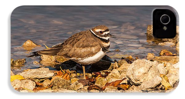 Kildeer On The Rocks IPhone 4s Case by Robert Frederick