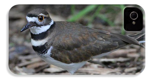 Killdeer IPhone 4s Case by Dan Sproul