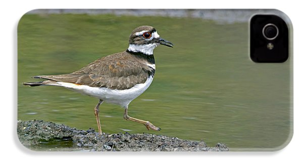 Killdeer Walking IPhone 4s Case by Sharon Talson