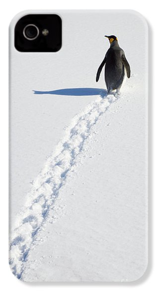 King Penguin And Tracks S Georgia Island IPhone 4s Case by Yva Momatiuk and John Eastcott