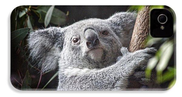 Koala Bear IPhone 4s Case by Tom Mc Nemar