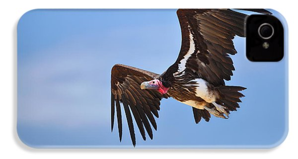 Lappetfaced Vulture IPhone 4s Case by Johan Swanepoel