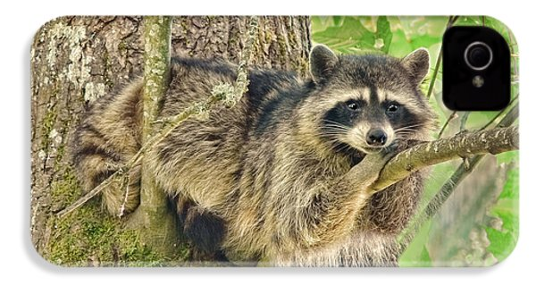 Lazy Day Raccoon IPhone 4s Case by Jennie Marie Schell