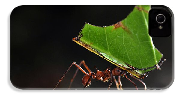 Leafcutter Ant IPhone 4s Case by Francesco Tomasinelli