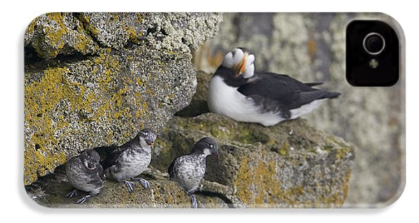 Least Auklets Perched On A Narrow Ledge IPhone 4s Case by Milo Burcham