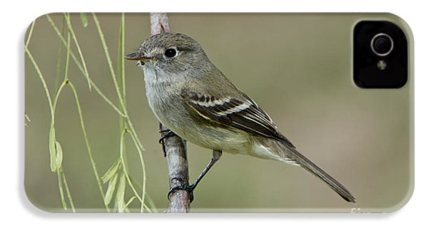 Least Flycatcher IPhone 4s Case by Anthony Mercieca