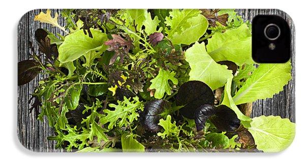 Lettuce Seedlings IPhone 4s Case by Elena Elisseeva