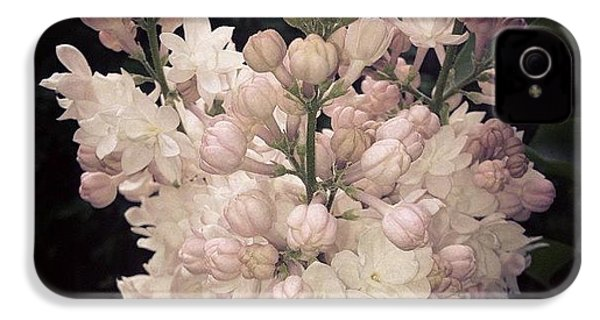 Lilacs Are Blooming IPhone 4s Case by Christy Beckwith