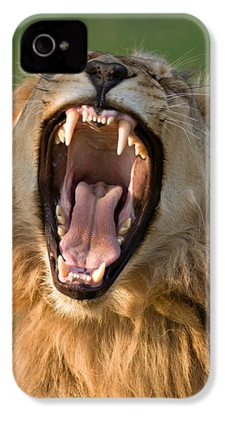 Lion IPhone 4s Case by Johan Swanepoel
