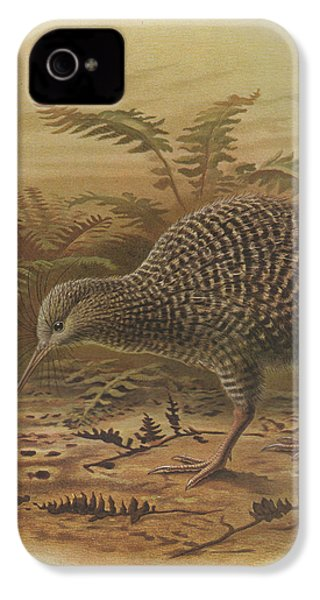 Little Spotted Kiwi IPhone 4s Case by Rob Dreyer